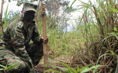 Como ecociudad, Medellín protege sus bosques y recursos hídricos